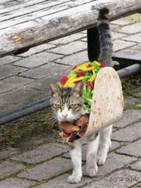 Taco_cat